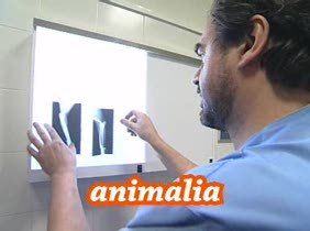 Animalia, 04.07.2010