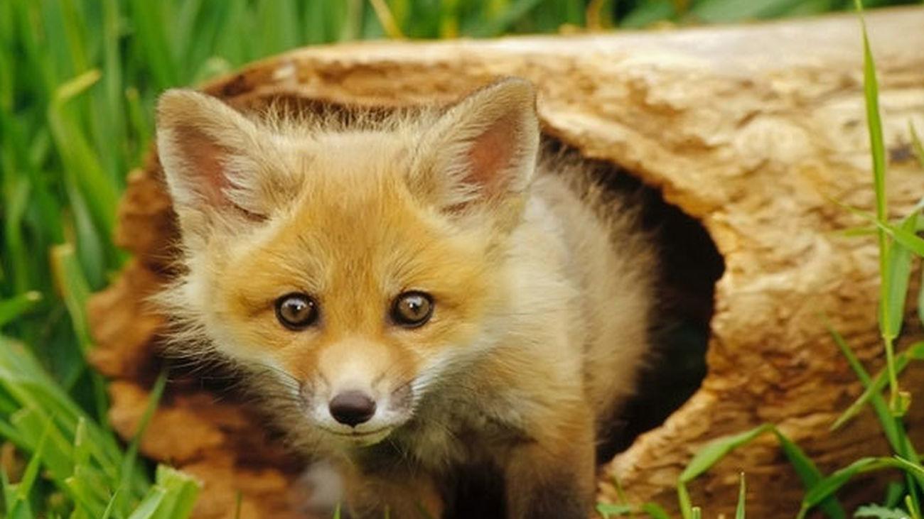 carrusel instinto animal