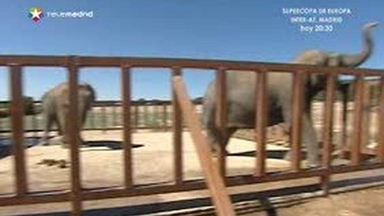 Helados para los animales del safari