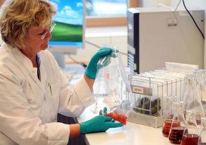 Alemania confirma que los pepinos españoles no son la fuente de la bacteria mortal
