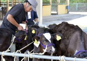 El Gobierno japonés prohíbe la distribución de carne vacuna de Fukushima