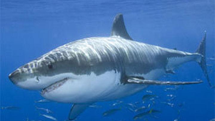 Tiburones: de depredadores a víctimas