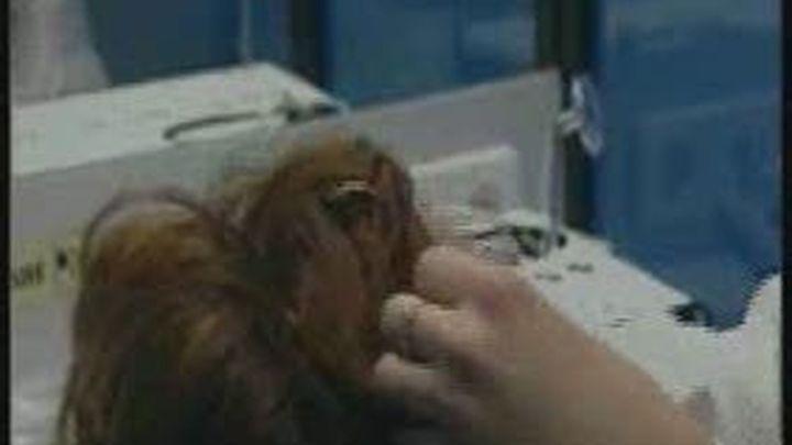 """La OCU denuncia el """"engaño"""" de los tratamientos contra la alopecia"""