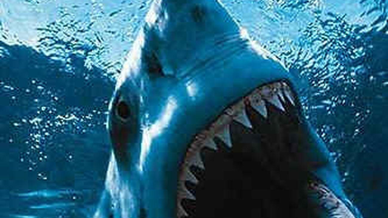 Un tiburón mata a un surfista en el oeste de Australia