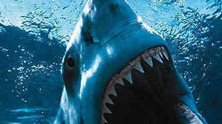 Un tiburón mata a un surfista en California