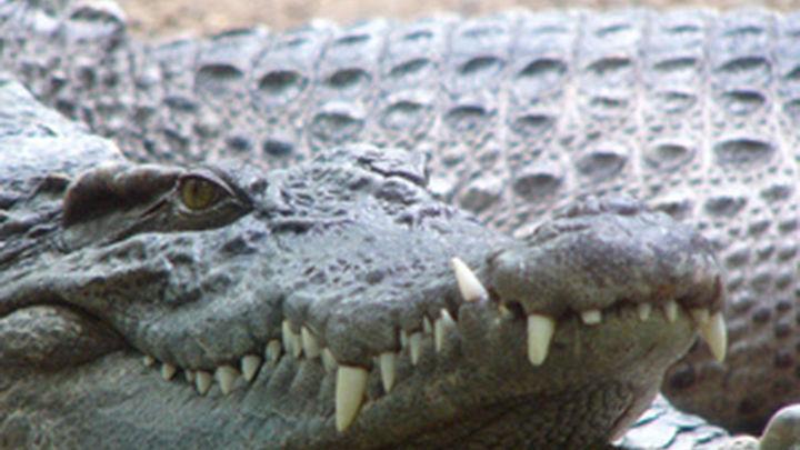 Un niño de 12 años muere devorado por un cocodrilo en Australia