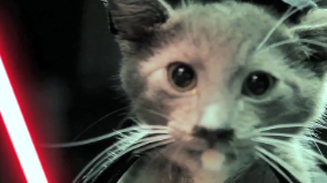 Multas de hasta 1.500 euros en Pinto por alimentar gatos sin autorización