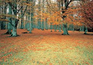 blog tiempo otoño