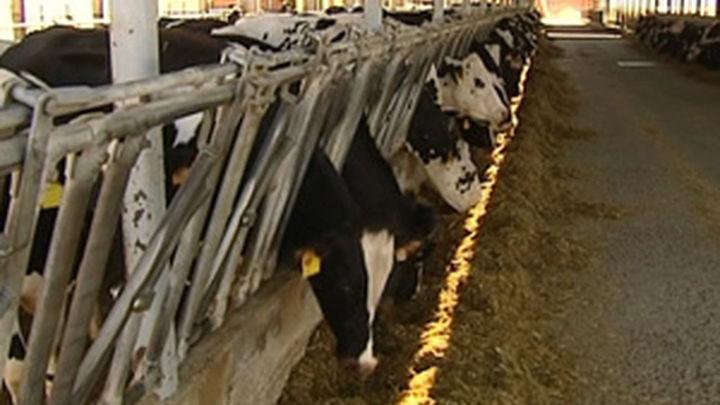 El Gobierno reunirá al sector lácteo y distribución para tratar crisis de precios