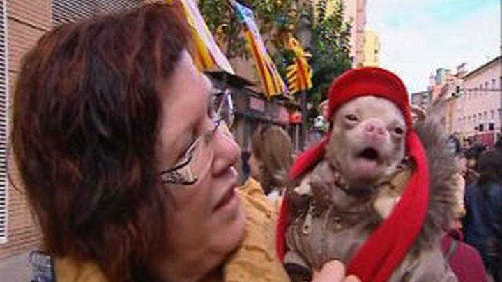 Cientos de personas acuden a la bendición de mascotas de San Antón