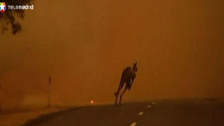 El fuego arrasa más de 100.000 hectáreas en Australia