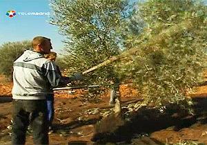 Saborea Madrid: Torremocha y el aceite de oliva