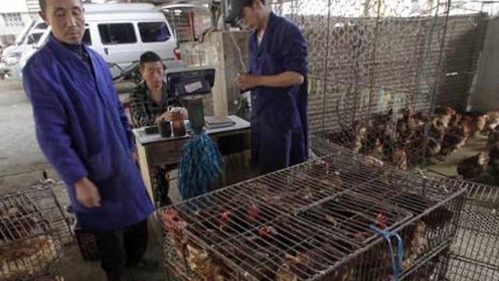 Ya van nueve muertos y 28 casos por el brote de gripe aviar en China