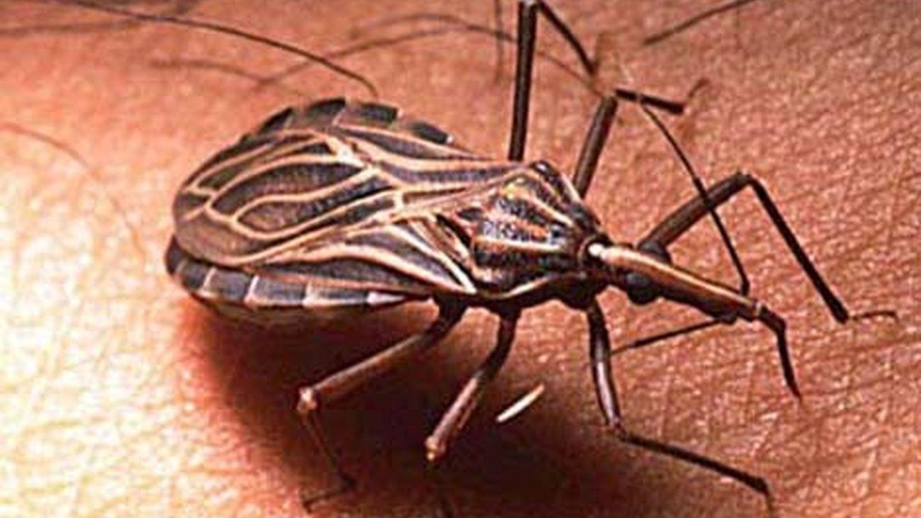 La Sanidad madrileña atiende actualmente a cerca de 1.000 pacientes con la enfermedad de Chagas