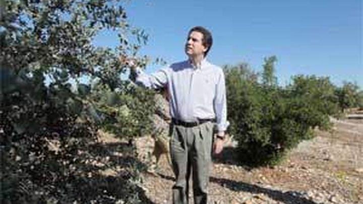 Madrid foresta 4.000 hectáreas de terreno agrícola poco productivo