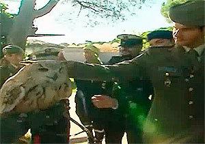 Madrid Distrito Animal: Los visitantes del zoo