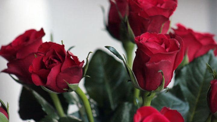 Los madrileños pueden votar este miércoles su rosal preferido
