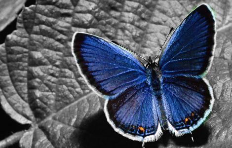 mariposa_470