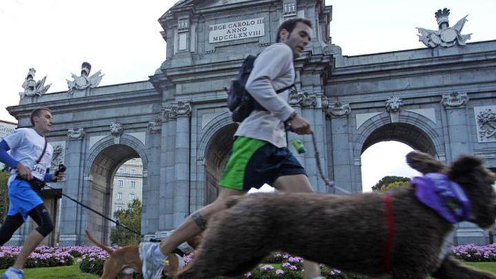 Perros y amos correrán en Perrotón para reivindicar la adopción de animales