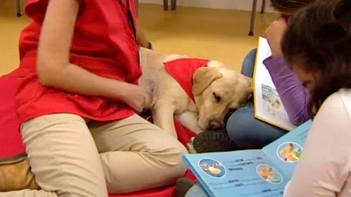 Un taller de lectura... ¡para perros!