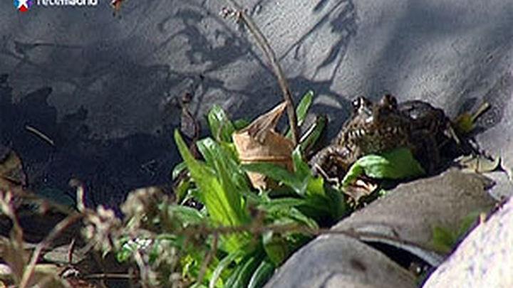 Una isla flotante en el embalse de Molino de la Hoz da cobijo y criar a distintas especies