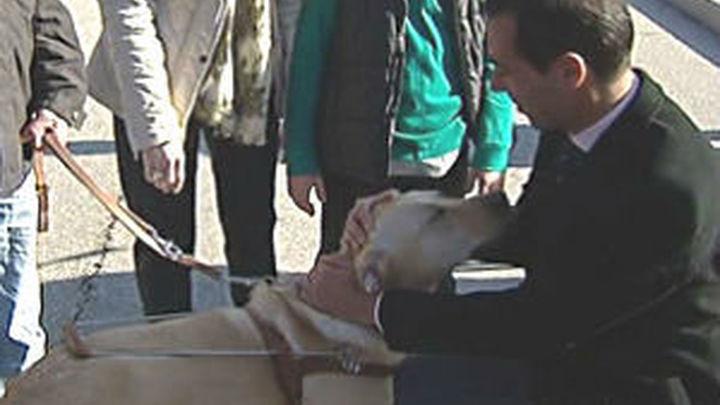 La Comunidad de Madrid pone en marcha el primer programa para adoptar perros-guía