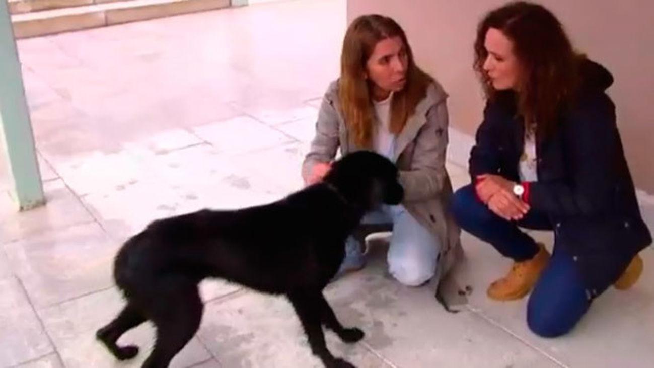Récord de adopciones de perros y gatos en el centro regional de acogida