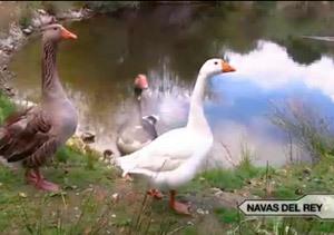 Un centro de fauna salvaje al lado de Madrid