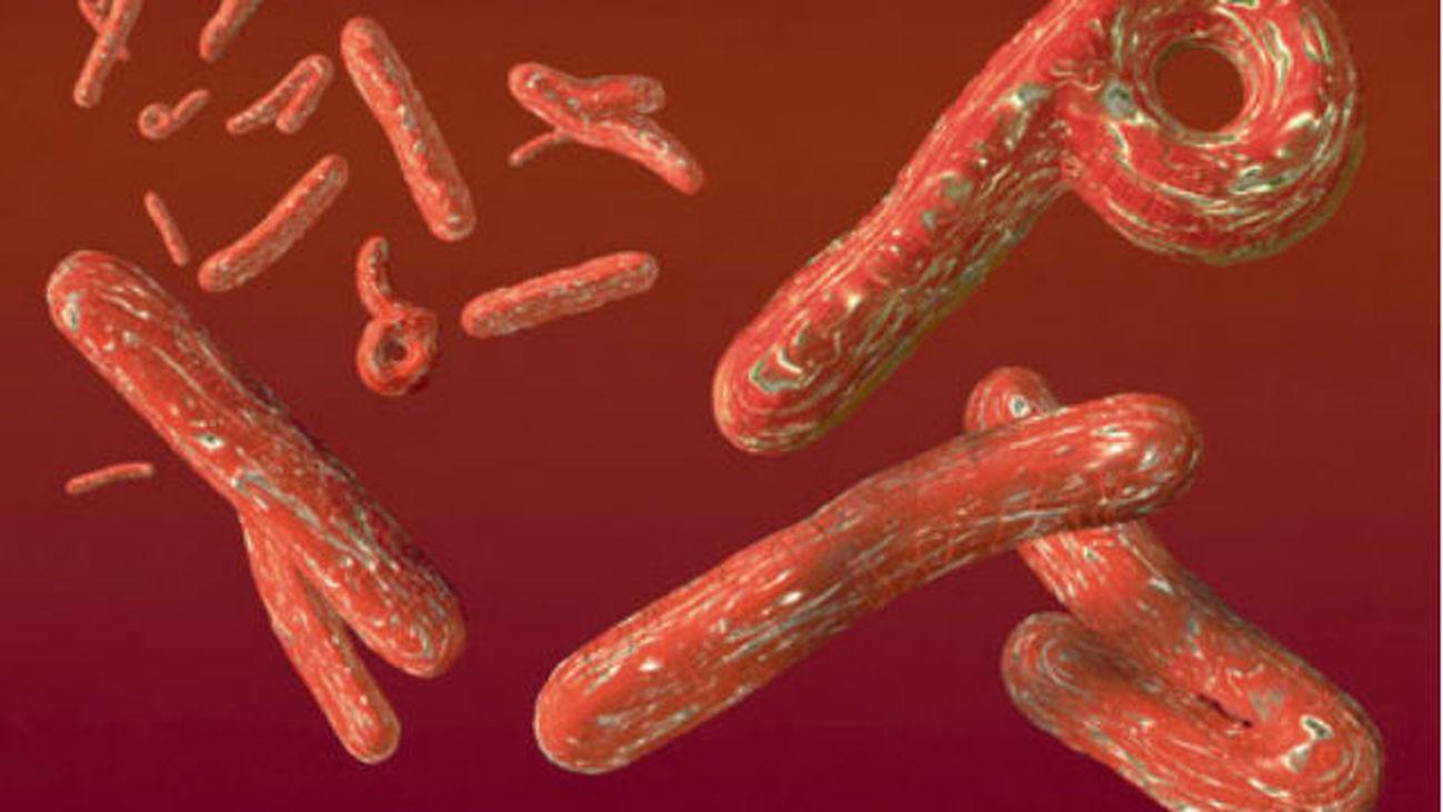 ebola.mp4