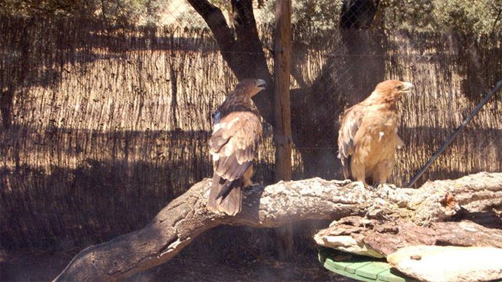 El hospital de fauna de GREFA ha atendido a cerca de 3.700  animales en 2014