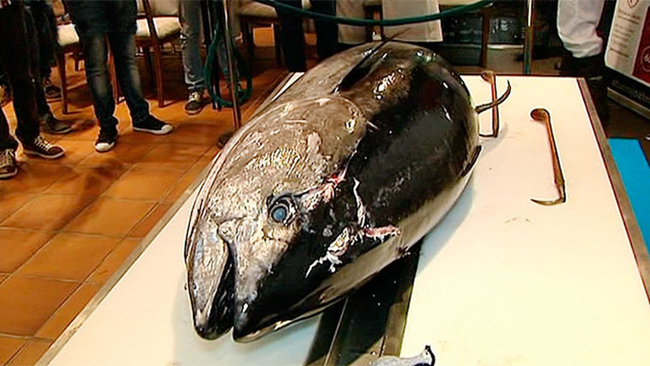 Ronque del atún rojo en Madrid