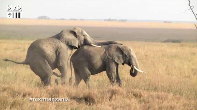 Madrileños por el mundo se va este martes de safari