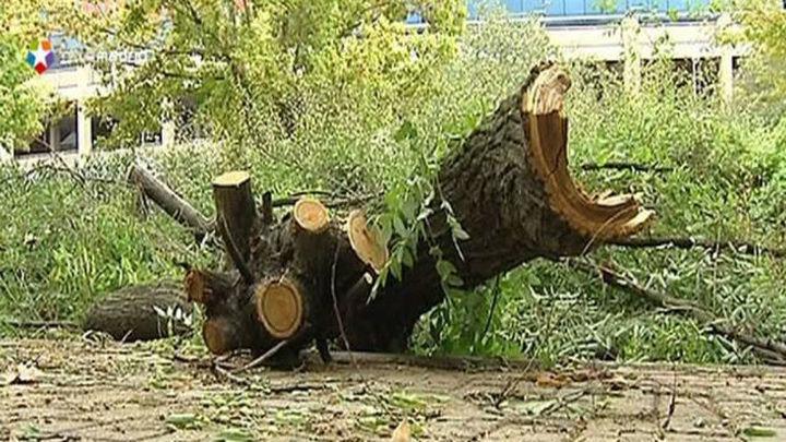 Cae una rama junto a un paso de peatones en la calle Ayala sin causar heridos