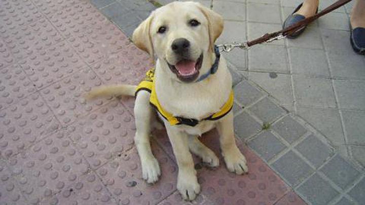 Los perros guía podrán entrar en todos los espacios de la Comunidad de Madrid