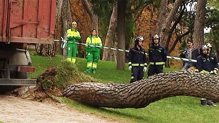 La tormenta derriba un árbol de 20 metros en Chamberí