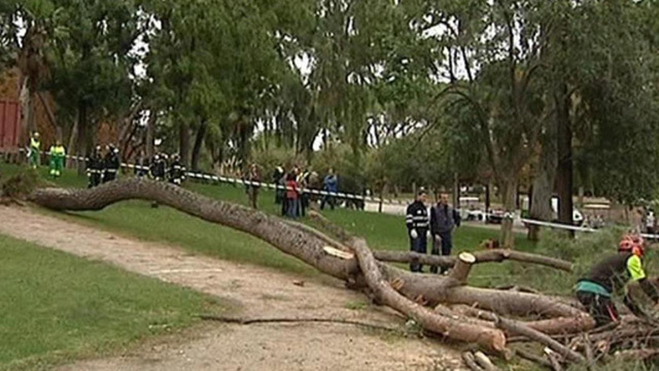 El Retiro cerrará los días de viento por la caída de árboles