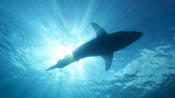 Un tiburón mata a un surfista en Australia