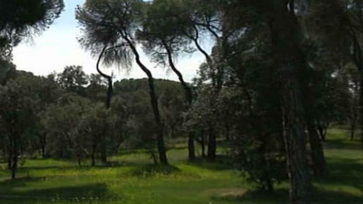 Un hombre que buscaba chatarra encontró armas y explosivos en un monte de Madrid