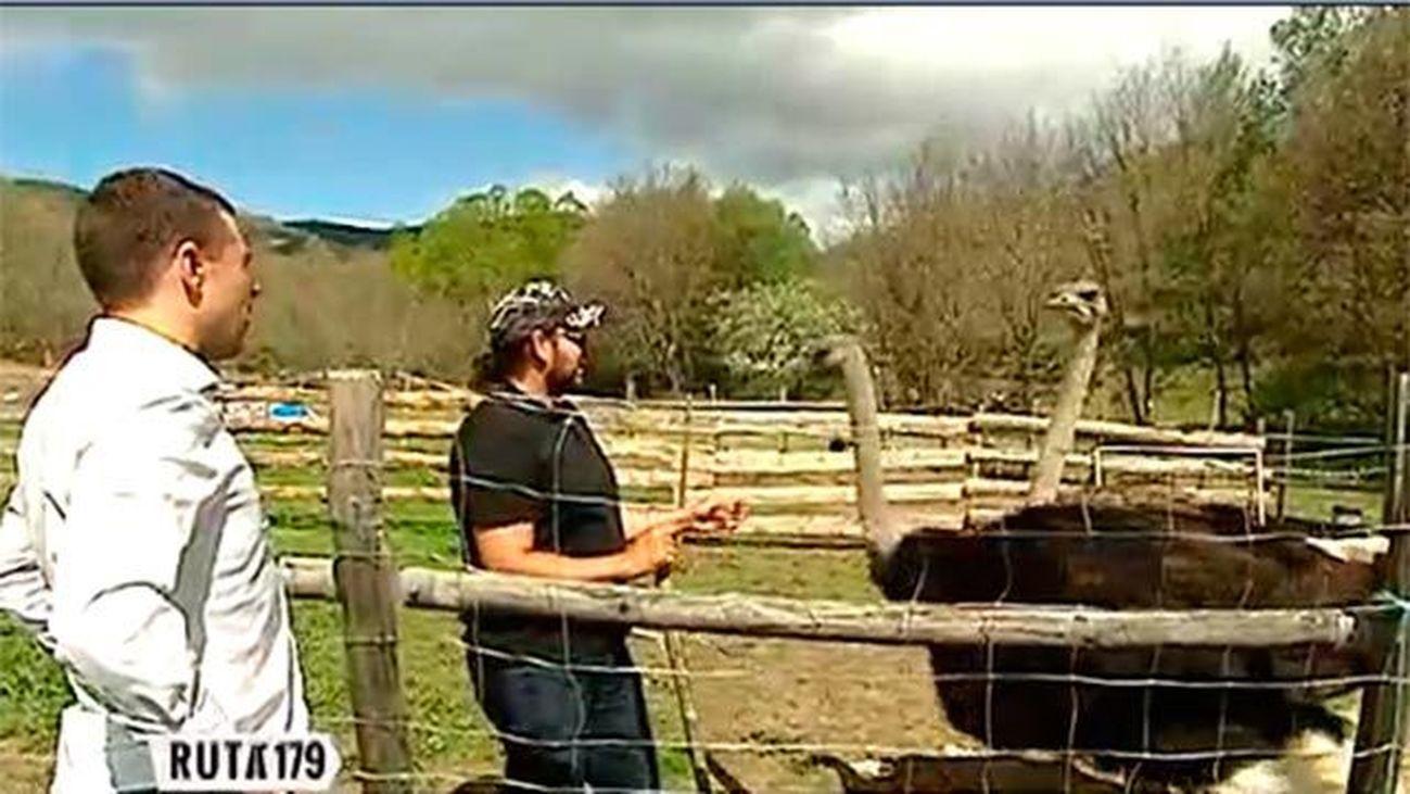 Puebla de la Sierra: Cabras, vacas y... ¡avestruces!