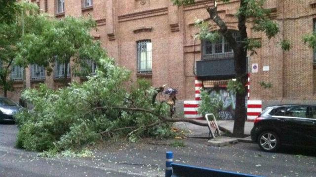 La tormenta en Madrid provoca la caída de árboles en la zona centro