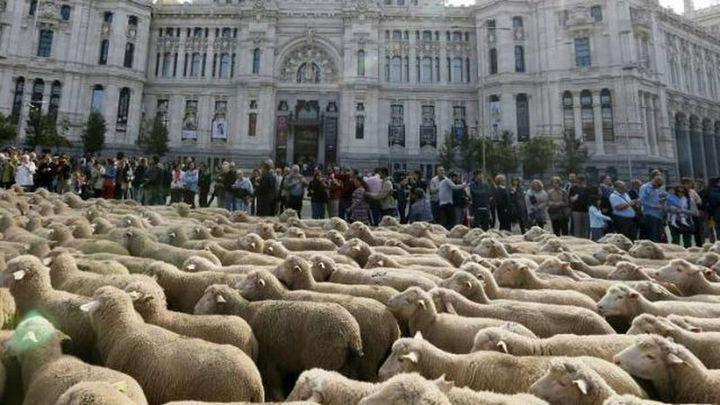 Rebaños ovinos y folclore reviven en Madrid la tradición de la trashumancia