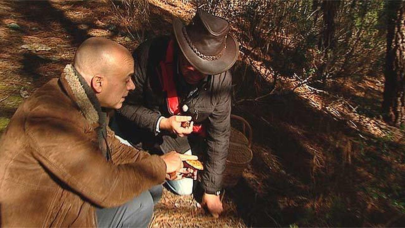 Robledillo de la Jara: Paraíso micológico