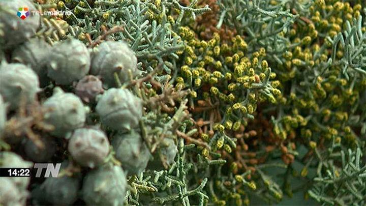 La Comunidad activa su sistema de información de niveles de polen