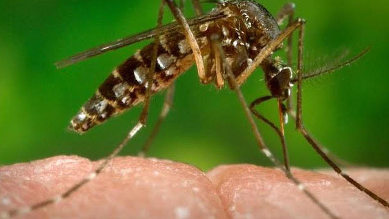 Vigilancia para controlar la posible llegada del mosquito tigre, transmisor del Zika