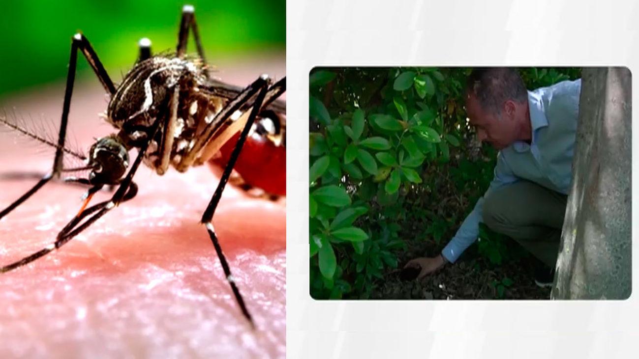 Doscientas trampas contra el mosquito tigre