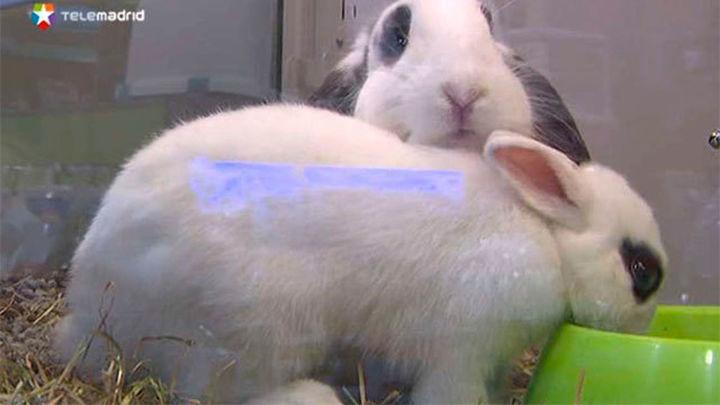 ¿Prohibir la venta de animales en tiendas y comercios de la Comunidad?