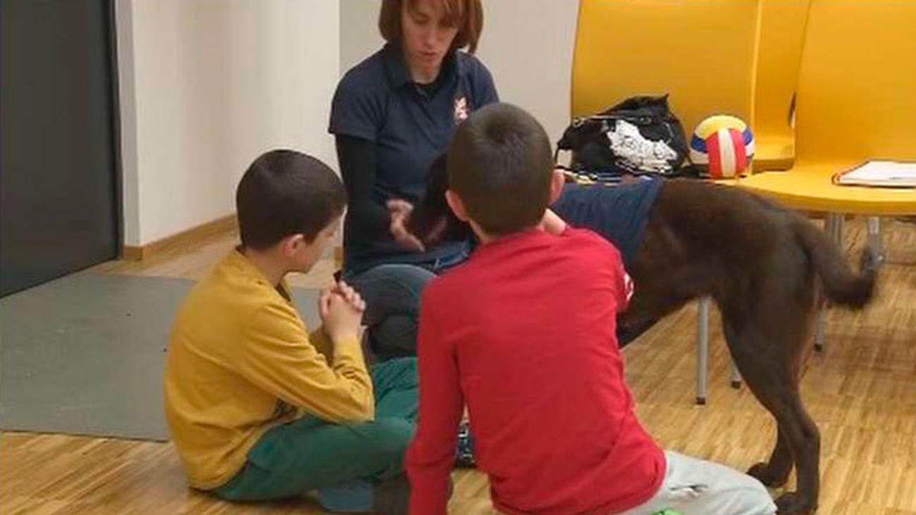 Una aplicación móvil de la Comunidad fomenta la adopción de animales