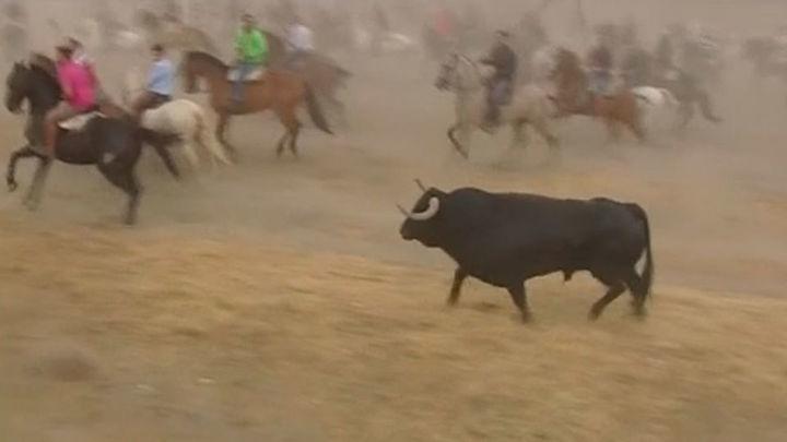 Primer 'Toro de la Peña' en Tordesillas sin sacrificio del animal