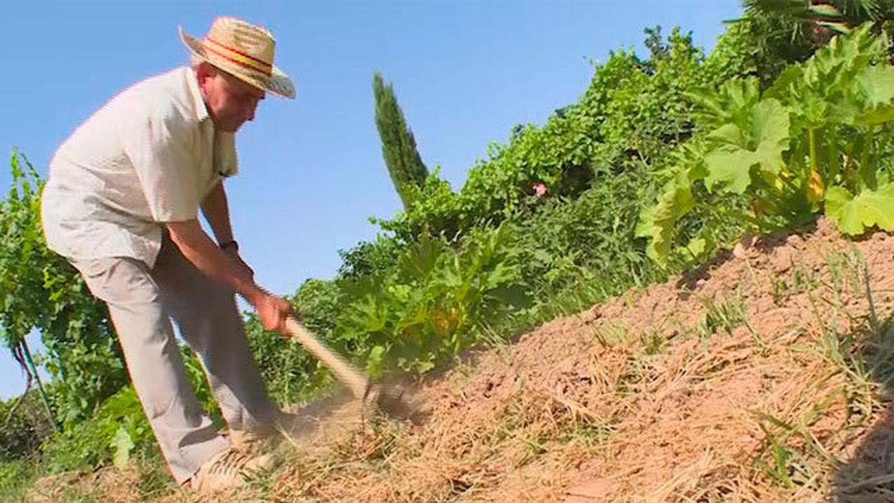 San Fernando de Henares: Huertas regadas por el Jarama