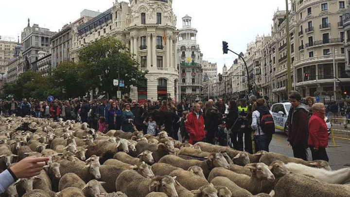 Centenares de ovejas recorren Madrid en la Fiesta de la Trashumancia